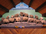 Schafsshow mit unterschiedlichen Arten