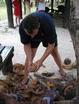 mit einfachen Hilfsmitteln Kokosnüsse knacken