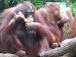 Zoo von Singapur