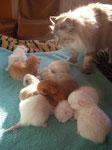 Welches Kitten nehm ich nun?