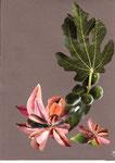 Fleurs de Figues ?  ( 24 x 30 )