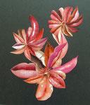 Fleur de Cactus (24x30)