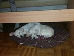 Snoopy & Struppi