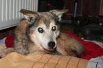 Laky - gestorben an Altersschwäche