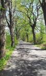 Der Weg von Friedland nach Schönwald
