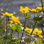 Fantasie & Wirklichkeit Fotografien und Gedichte Kathrin Steiger Blumen Blumenbild romantisch verträumt glitzer Wasser