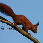 Fantasie & Wirklichkeit Fotografien und Gedichte Kathrin Steiger Eichhörnchen