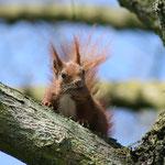 Fantasie & Wirklichkeit Fotografien und Gedichte Kathrin Steiger Eichhörnchen niedlich frech
