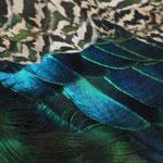 Fantasie und Wirklichkeit Fotografien und Gedichte  Kathrin Steiger  Pfauenfedern märchenhaft verträumt fantasievolle bunte Welt  Phantasie Fantasy
