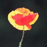 Fantasie und Wirklichkeit Fotografien und Gedichte Kathrin Steiger Blume Licht märchenhaft verträumt  fantasievolle bunte Welt Phantasie Fantasy