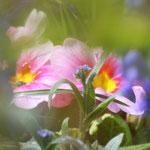 Fantasie & Wirklichkeit Fotografien und Gedichte Kathrin Steiger Blumen Blumenbild romantisch verträumt