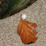Fantasie und Wirklichkeit Fotografien und Gedichte Kathrin Steiger Perle und Herbstblatt im Sand märchenhaft verträumt  fantasievolle bunte Welt Phantasie Fantasy