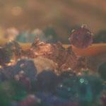 Fantasie & Wirklichkeit Fotografien und Gedichte Kathrin Steiger Märchenhaft verträumt  Perlen Muschel