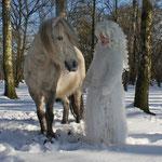 Fantasie & Wirklichkeit Fotografien und Gedichte Kathrin Steiger Winter Wald Märchenwald Schnee Schneefee  Fee Elfe Schneeprinzessin Pferd Pony