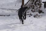 Timo hat Spaß im Schnee