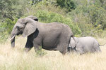 Elefantenkuh mit Baby und Halbwüchsigem ISO 200 f/8 1/250 s  170 mm