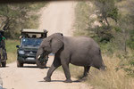 Elefant Jungtier ISO 200 f/10 1/400 s 170 mm