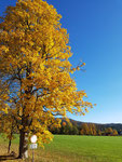 """""""Goldener Oktober"""""""
