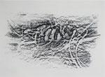 Naturstücke - Frottagen 2011 (3) Graphit auf Papier, 42x29,5cm