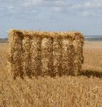 Balle 90x120 paille de blé
