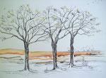 Drei Bäume, Feder, Aquarell, 30 x 40 cm