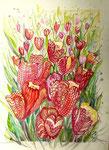 Tulpen, Stifte, Aquarell, 40 x 30 cm