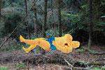 Sumo, besiegt, 2006, 75 x 170 cm