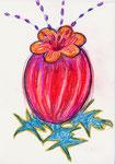 NN (Bauchblume)