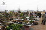 Das Bonsaizentrum Münster hat ein großes Angebot an Pflanzen
