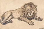 Lion 1921 fusain André Aaron Bilis