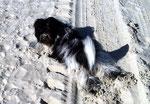 Wälzen im Sand ist fast so schön wie Wälzen im Schnee.