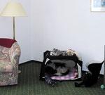 Meine Hütte war natürlich mit und ich hatte eine besonders schöne Ecke in dem Zimmer.