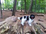 Frauchen und ich haben im Berner Gutspark diese umgefallenen Bäume gefunden.