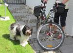 Habe ich Euch schon erzählt, daß ich am Fahrrad laufe? Ehrlich gesagt, ich hasse es, wenn Frauchen mich festmacht.