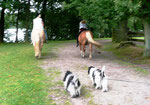 An einem Sonntag waren wir mit Mama und ihrer Familie im Pony-Park.