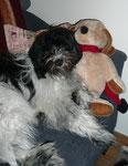 """Frauchen sitzt im Moment häufig im Arbeitszimmer. Ich liege dann gern bei """"Hund""""."""