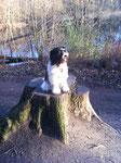 Ich bin mit Frauchen an der Alster spazieren gegangen und mal schnell auf diesen Baumstumpf gehüpft.