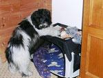 Wer hat meine Schlafbox in die Ecke gestellt? Das geht gar nicht! Allein bekomme die nicht wieder 'raus. Ich werde mal Herrchen fragen.