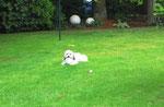 Ernie hat ein Loch in meinen Ball gebissen, jetzt lässt er sich viel besser packen, leider rollt er nicht mehr ganz so gut beim Fußballspielen mit Herrchen.