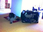 Meine Matte und meine Schlafbox sind in strategisch günstiger, zentraler Position angeordnet.