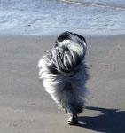 Als Erstes sind wir zum Strand gegangen. Da war es wieder: das Wasser, was immer zu mir hin und wieder weg schwappt.