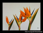Blumen-Rahmen