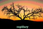 capillary(ナミビア・ナミブ砂漠)