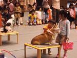 ドッグセラピー(木の津祭り)