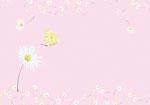 Umschlag Gänseblümchen