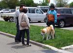 おおおお~秋田犬、初めて見ました。感動です!