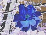 Blaue Rose © Irene Ehlers 2014