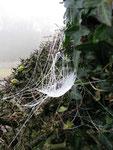 A spider slide