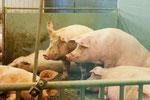 Haus Düsse: Unterschiedliche Formen der Tierhaltung