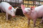 Biohof: Tierhaltung